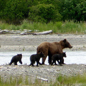 CC Image courtesy of Katmai National Park and Preserve on Flickr.